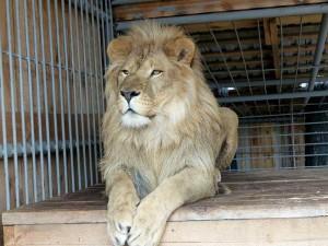 Тюменский зоопарк